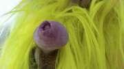 Photos de la bite de Froufrou590, mon sexe au carnaval